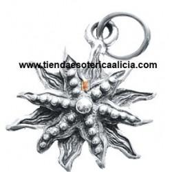 Estrella de mar doce puntas